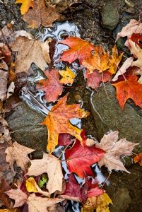 Fall / Image via: The Pictures #aloettefall