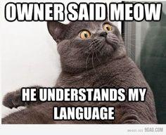 cats, anim, laugh, stuff, meow, funni, humor, kitti, thing