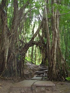 cool arch on the Manoa Falls trail