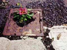 The Pansy Project uses guerrilla gardening to make human rights statements. #guerrillagardens