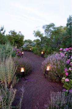 lavender and lights