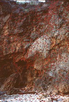 crab migrat, christma island, island nation, red crab christmas island