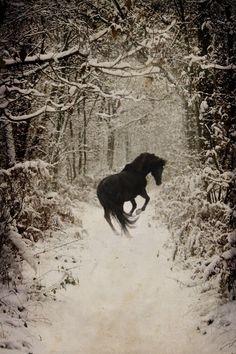 Black Horse in Snowy Woods