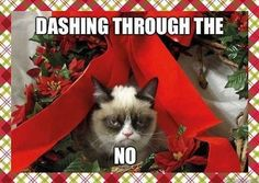 christmas music, grumpi cat, grumpy kitty, funny pictures, funny cats