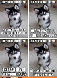 Animal Memes: Introducing Skeptical Newborn Puppy