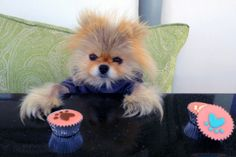 The Real Housewives of Beverly Hills Photos | Giggy: The Most Stylish Dog In BH