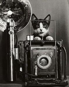 cats, anim, vintage cameras, chees, black white