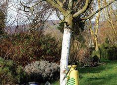 www.rustica.fr - Traiter les arbres et arbustes en hiver