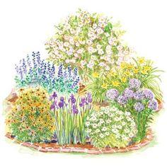 Soft, Romantic Garden  A. 1 Rose (Rosa rugosa 'Alba'): Zones 2–9  B. 2 Daylily (Hemerocallis 'Hyperion'): Zones 3–10  C. 2 Phlox paniculata 'Laura': Zones 4–8  D. 1 Shasta daisy (Leucanthemum 'Becky'): Zones 4–8  E. 2 Siberian iris (Iris sibirica 'Caesar's Brother'): Zones 4–9  F. 2 Black-eyed Susan (Rudbeckia 'Goldsturm'): Zones 4–9  G. 2 Baptisia australis: Zones 3-9