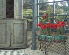 Plants that can hurt pets. tile design, cement tiles, color, plant stands, red flowers, porch, garden, sunroom, filmor clark