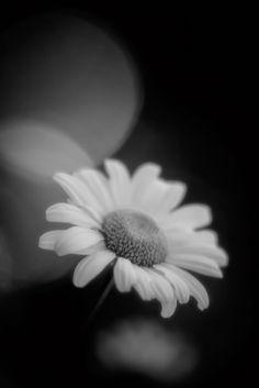 Wild Flower Bokeh