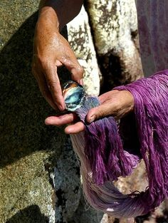 Dyeing cotton thread with one of the last ancestral Purpura (murex) dyers on the planet on the coast of Oaxaca.