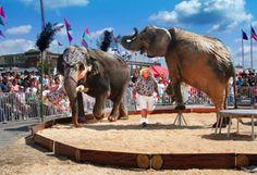 Elephant Encounter | Jan 18 - Feb 3, 2013 | South Florida Fair