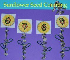 sunflow seed, preschool kindergarten, seed count, stick preschool, count stick