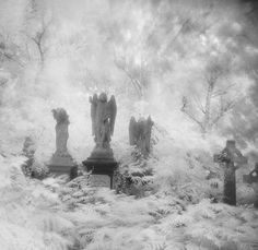 Stoke Newington Abney Park Cemetery