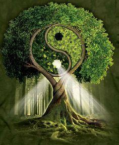 Yin-Yang Tree by Michael McGloin
