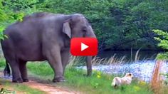 The Story of This Elephant and Dog Odd Couple is So Heartwarming, Yet Tragic!