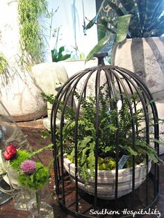 plant in a birdcage