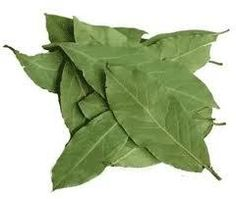 Bay Leaf: Sacred to the god Apollo. This herb is used for protection, good fortune, success, purification, strength, healing and divination. It is traditional to write wishes on the leaves and then burn them to make them come true. Can be used in charms that when placed under the pillow will induce prophetic dreams. Place a leaf in the corner of each room in the house to protect all that dwell there. Carry bay leaf or use in a protection charm to protect yourself against magical attack.