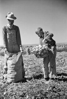 Arthur Rothstein (New York, 17 luglio 1915 – New Rochelle, 11 novembre 1985): Child labor in the onion field, Delta County, Colorado, 1939