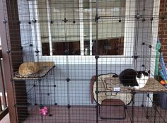 Build A Do-It-Yourself Outdoor Cat Enclosure Part 2