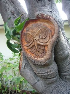 owl tree carving....