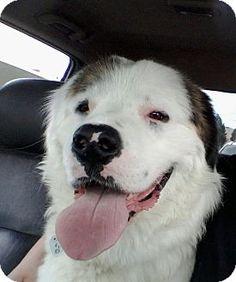 Be A Lucky Dog Rescue Colorado Springs