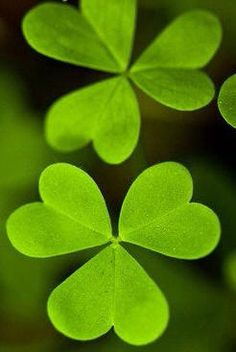 St. Patrick's Day ...