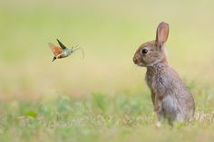 Rabbit and the butterfly by Stéfane Gautier on 500px