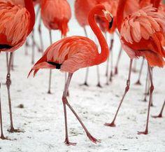 Colors-Flamingos in winter