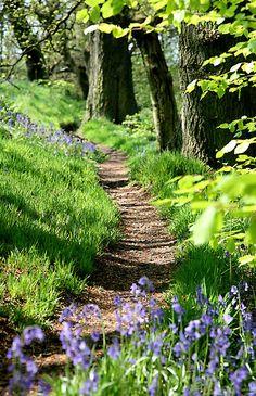 sunny green & purple path