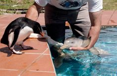 Baby dolphin And penguin