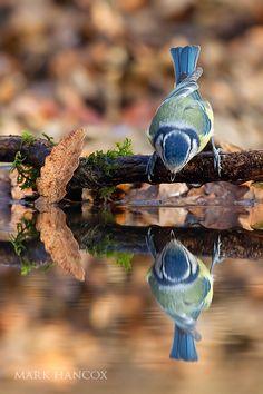 Thirsty little bird.