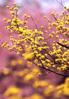 **Pink & yellow