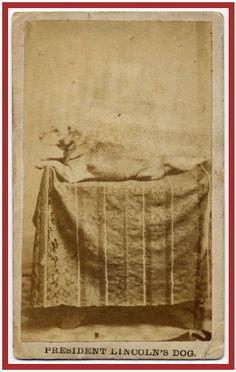 President Lincoln's Dog