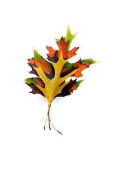 autumn short stack (mary jo hoffman)