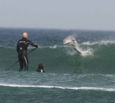New Smyrna Beach  Dolphin jumping from surf! awesome
