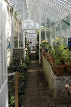 Inside the restored Victorian greenhouses at Coombe Lodge.
