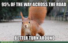 Squirrel Logic