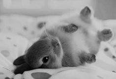 adorable bunny, cute rabbit, white bunnies, babies and bunnies, cute bunny