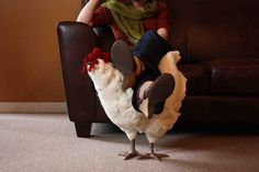 Chicken Footstool :D