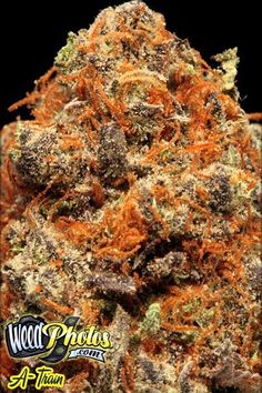 Stoner Weed Is All You Need N Nuthin Else On Pinterest