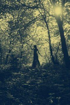 fairi, forest, sweet dreams