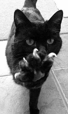 hand, kitty cats, high five, anim, pet, black cats, nails, claw, funny kitties