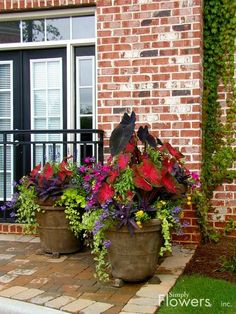 Wow, what a stunning arrangement! I love the way the red leaps out against the darker leaves, and the green trailing plants lend an extra dimension. #containergardening