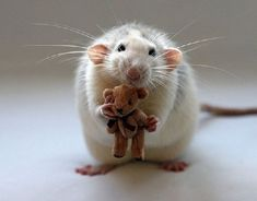 Freaking Cute!...A rat and a tiny teddy