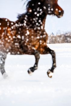 Snow Sparkle Horse by Barbara OBrien, via Behance