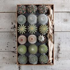 cacti repetitive patterns