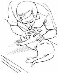 """HowStuffWorks """"How to Save a Choking Cat: Tips and Guidelines"""""""