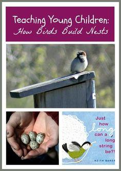 classroom idea, children's bird books, kindergarten birds, young children, bird feeders, nest, children books, bird build, teaching strategies